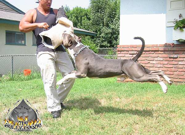 How Much Do Military Dog Trainers Make