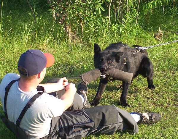 Snake Safe Dog Training