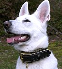 Royal Nappa Padded Hand Made Leather Dog Collar - code: C443