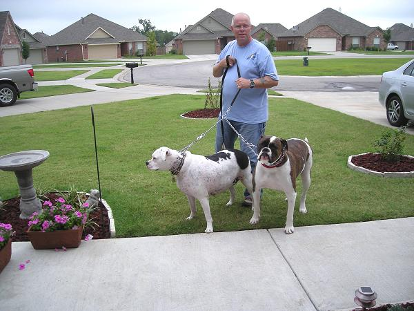 dog leashes for American Bulldog