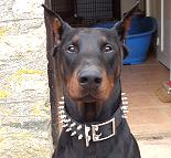Handcrafted Leather Spiked Dog Collar For Large Breeds