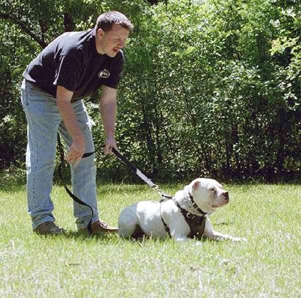 dog training harness
