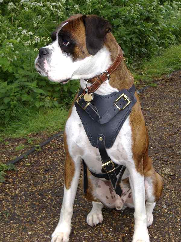 Taz Dog Training