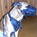 dog harness for Malinois