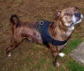 Nylon multi-purpose dog harness