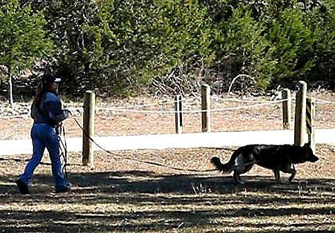 Nylon dog leash for training and tracking