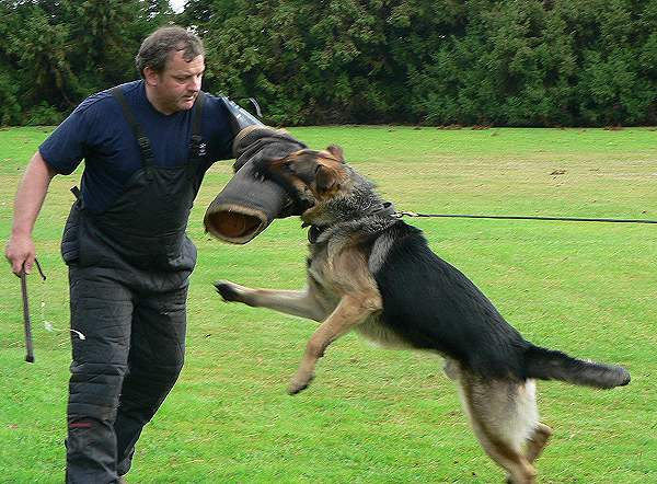 Buy Waterproof Dog Leash Police Dog Leash