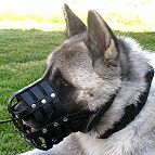 dog muzzle for Akita