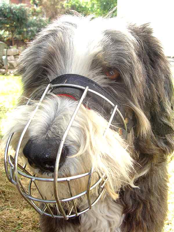 Collie Wire Basket Dog Muzzles Size Chart Muzzle Collie