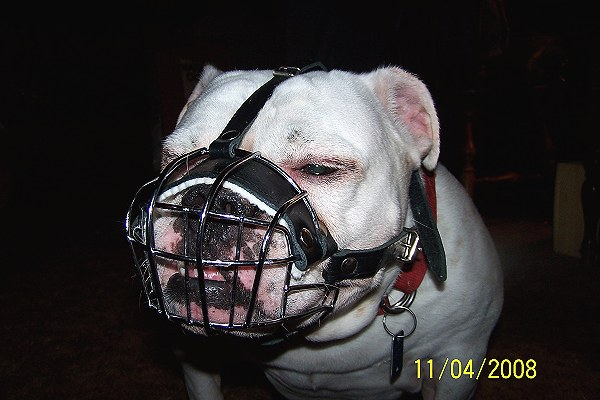 Get English Bulldog Padded Wire Basket Dog Muzzle
