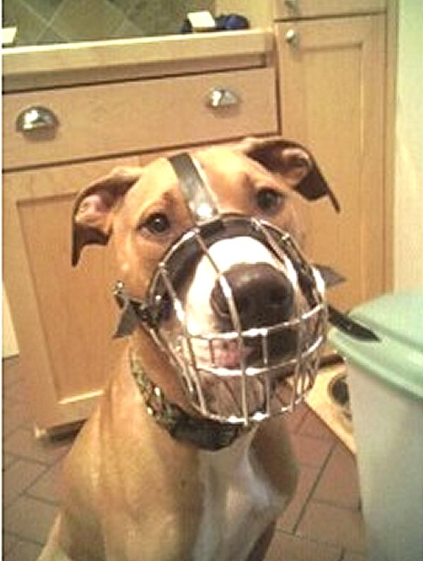 Basket muzzle wire basket dog muzzles size
