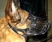 German-Shepherd dog muzzle