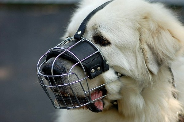 Can Dogs Still Bark With A Muzzle On