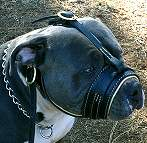 Leather Dog Muzzle for training dog