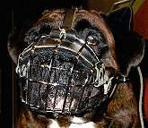 Boxer wire dog  muzzle
