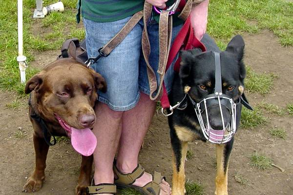 Best Dog Trainers In Minnesota