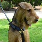 Leather tracking dog harness adjustable,handcrafted with luxury brass hardware : With this harness your Airedale Terrier will be a Star