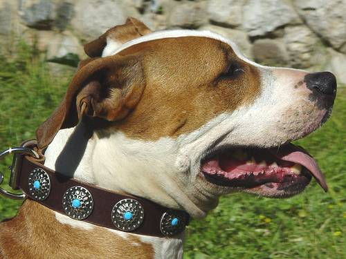 Handcrafted Leather Dog Collar For Large Breeds With Silver Plated Circles and With Blue Stones