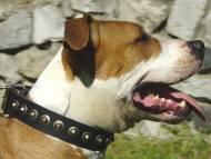 Handcrafted Leather Dog Collar For Medium Breeds With Circles