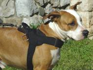 Nylon multi-purpose dog harness for tracking / pulling with extra handle.This harness is widely used by Amstaff owners