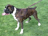 Tracking / Pulling / Agitation Leather Dog Harness : Padded and Adjustable : Designed to Fit Your Boxer just Perfect