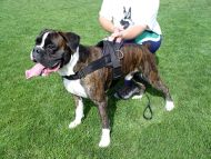 Nylon dog harness for tracking / pulling Designed to fit Boxer