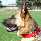 padded nylon dog collar