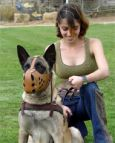 Tracking / Pulling / Agitation Leather Dog Harness : Padded and Adjustable : Designed to Fit Your Malinois just Perfect