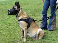 Nylon multi-purpose dog harness for tracking / pulling with extra handle.This harness is widely used by Malinois owners