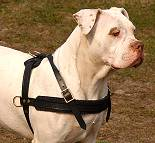 Tracking / Pulling / Agitation Leather Dog Harness : Padded and Adjustable : Designed to Fit Your American Bulldog just Perfect