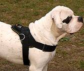 All Weather multi-purpose dog harness for tracking / pulling with extra handle.This harness is widely used by American Bulldog owners