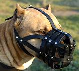 Amstaff leather basket dog muzzle