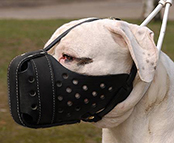 Leather dog muzzle.Padded.With agitation bar.Great item for American Bulldog