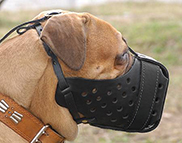 Leather dog muzzle for Bullmastiff