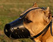 Amstaff Leather dog muzzle