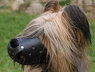 Everyday Briard Leather dog muzzle - product code : M51