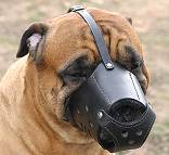 Bullmastiff Leather dog muzzle