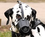 Everyday Dalmatian Leather dog muzzle - product code : M51