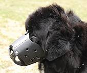 Newfoundland Leather dog muzzle