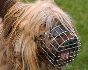 Dog Muzzle Light For Briard