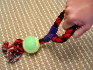 Fiber Bone with Ball and Handle