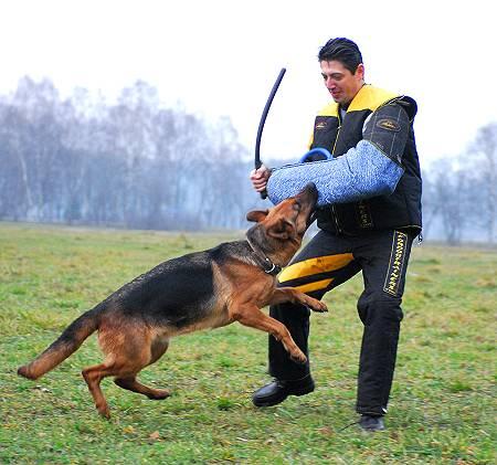 scratch-pants-scratch-jacket-scratch-suit-dog-in-action.jpg