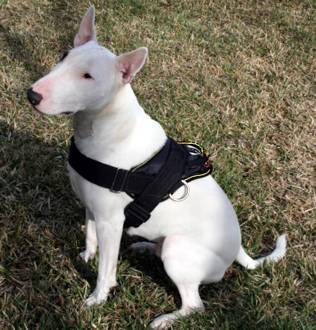 english pitbull terrier nylon multi purpose dog harness for tracking pulling 9959