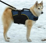 Nylon dog harness for tracking / pulling Designed to fit siberian-husky