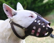 Bull Terrier leather muzzle