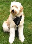 Agitation / Protection / Attack Leather Dog Harness Perfect For Your dog H1