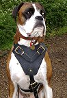 Boxer H1 Agitation / Protection / Attack Leather Dog Harness