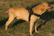 Tracking/Pulling Leather Dog Harness for Amstaff