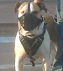 Agitation / Protection / Attack Leather Dog Harness - H1_9