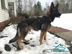 *Baron Presents Multifunctional Dog Harness for German Shepherds